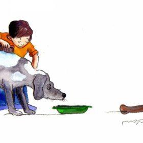 כלבים כלבים 312